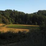 Crawford Beck Vineyard - View 6