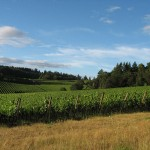 Crawford Beck Vineyard - View 4