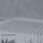 snow2_LG