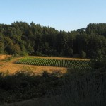 Crawford Beck Vineyard - View 6