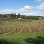 Crawford Beck Vineyard View